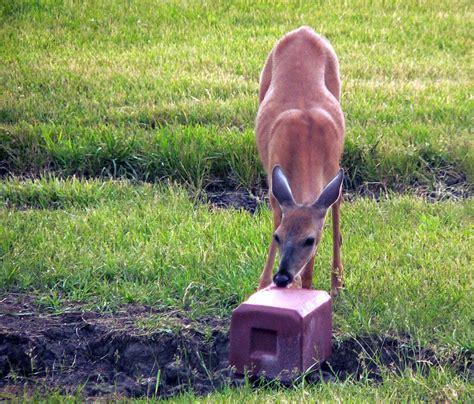 mineral licks for deer jpg 800x682