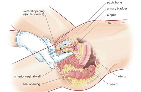 A ladys guide to getting to know your genitals png 700x462